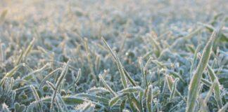 Ульяновск снова морозит: сегодня ночью 8 июня минус два