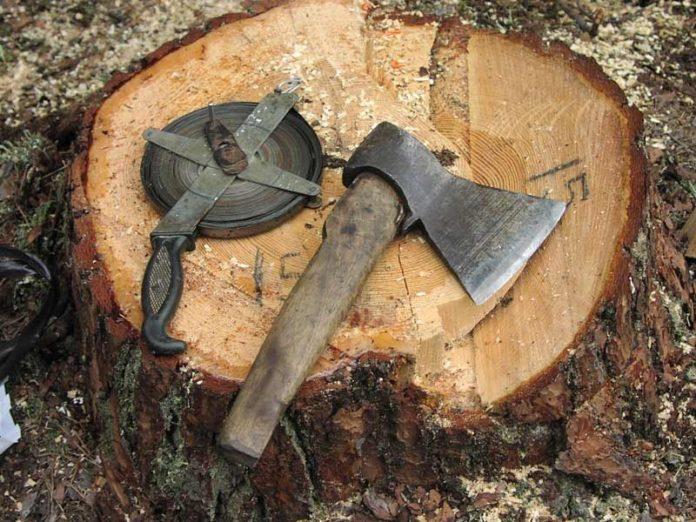 Ульяновца приговорили к 2,5 годам колонии строгого режима за вырубку деревьев на 1,7 млн рублей черный лесорубы, черный лесоруб,ульяновск,