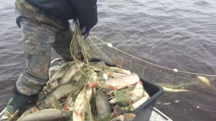 Штрафы на более чем 300 тысяч рублей и около двух тонн рыбы Ульяновск ,браконьеры,