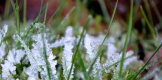 Этой ночью в Ульяновской области снова ожидаются заморозки Ульяновск погода 10 июня,