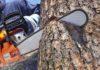 Возбуждено уголовное дело по факту незаконной рубки дубов в Старокулаткинском районе
