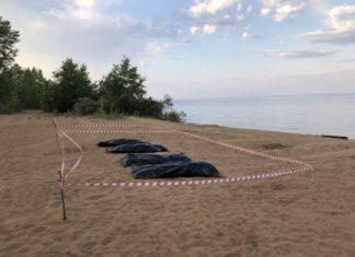 На пляже в Заволжском районе обнаружили огражденные черные мешки для трупов. Фото и видео места ЧП