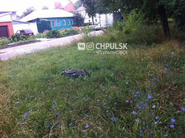 Найденный в Ульяновске крокодил оказался игрушечным