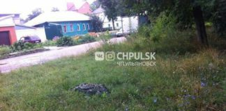 В Ульяновске нашли крокодила