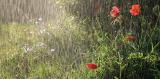11 июля в Ульяновске снова дождь
