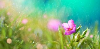 5 июля в Ульяновске обещают кратковременные дожди