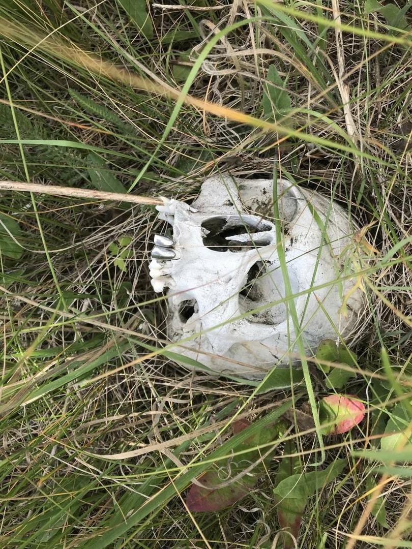 Охотник нашел человеческий череп возле села Алакаевка. Фото