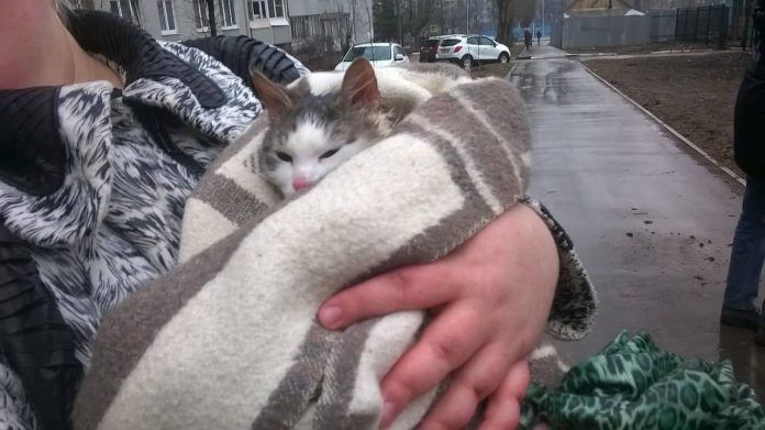 Ульяновские спасатели сняли кошку с крыши