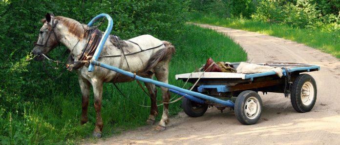 29-летний ульяновец украл у соседки конные телеги